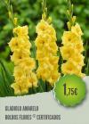 Gladiolo Amarelo