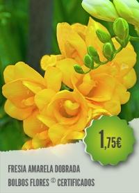 Fresia Amarela