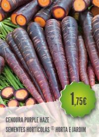 Cenoura Purple Haze