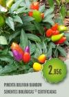 Pimenta Bolivian Rainbow