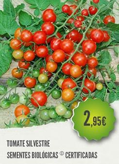 Tomate Silvestre