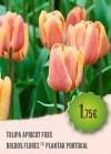 Tulipa Apricot Foxx