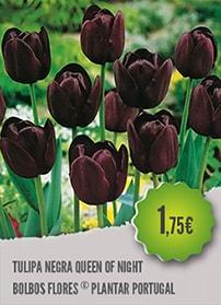 Tulipa Negra