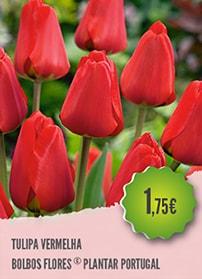 Tulipa Vermelha
