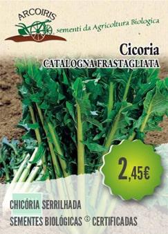 Chicória Serrilhada