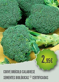 Couve Brócolo Calabrese