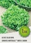 Alface Salad Bowl