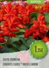 Salvia Vermelha