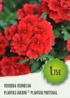 Verbena Vermelha