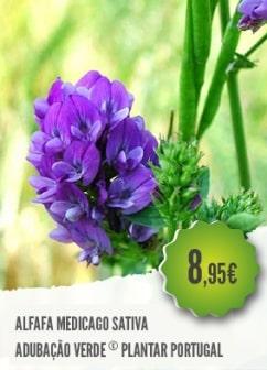 Alfafa Medicago Sativa