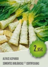 Alface Aspargo