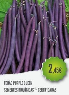 Feijão Purple Queen
