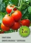 Tomate Berna