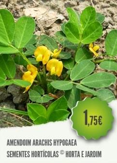 Amendoim Arachis Hypogaea